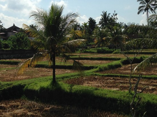 Anini Raka Resort & Spa: View from room on 2nd floor - they had just cut the rice fields