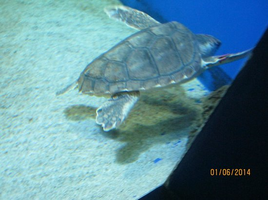 Tartarughe photo de acquario di cattolica cattolica for Depuratore acquario tartarughe