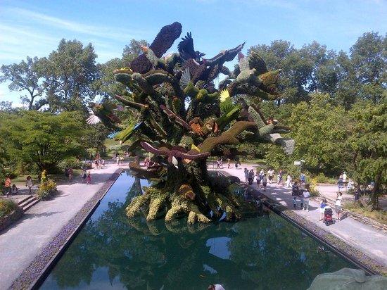 Montreal Botanical Gardens: tree