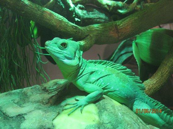 Acquario di Cattolica : iguana