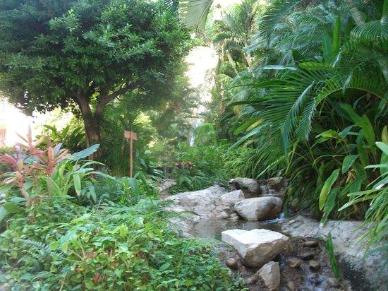 Camino Real Zaashila: garden