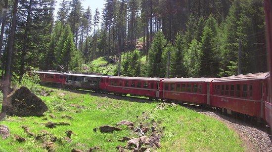 Bernina Express : attraversando boschi
