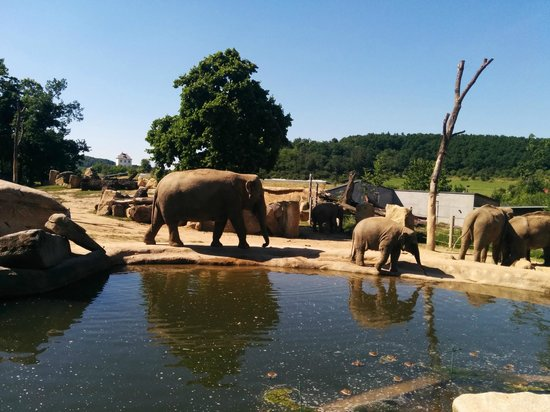 Prager Zoo: Elephants were quite far but luckily two of them came closer for a dip