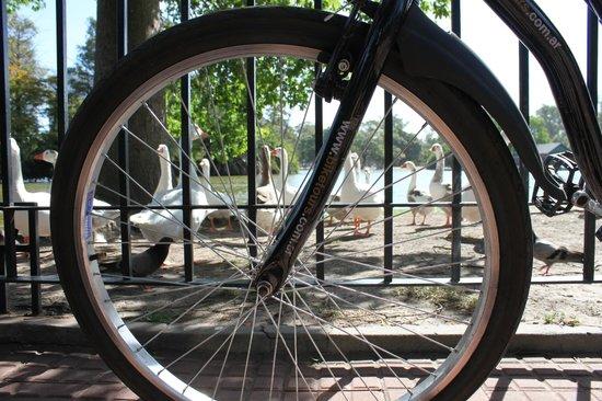 Bike Tours: Rose garden -