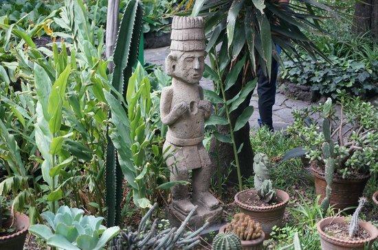 Musée Frida Kahlo : grounds