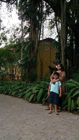 Taj Holiday Village Resort & Spa: The big banyan tree