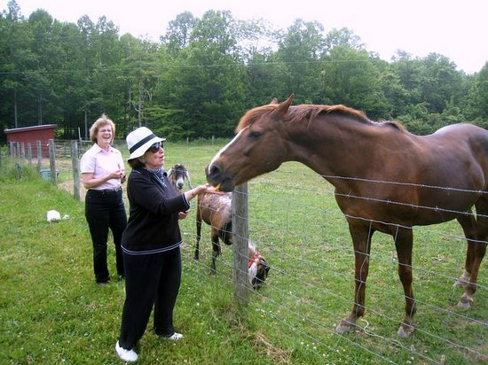 Stoney Meadow Inn B&B : Apples for horse