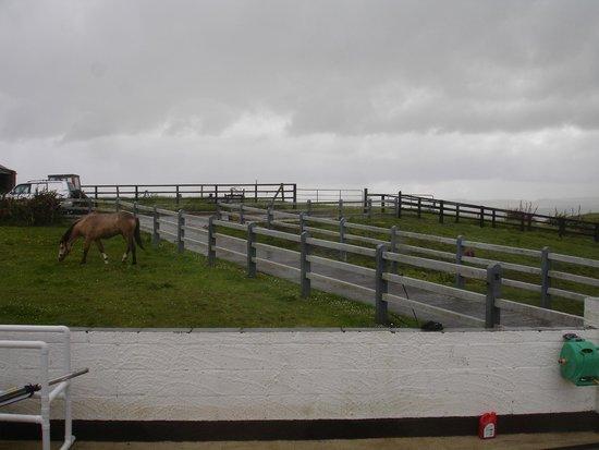 Cois Farraige: horses