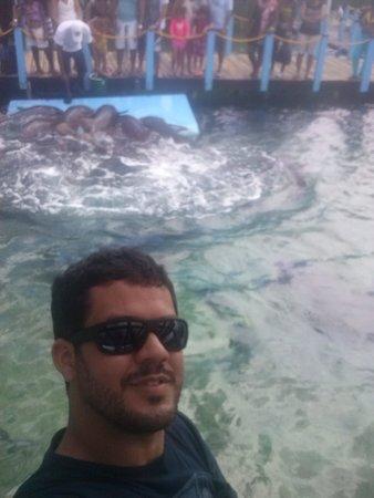 Tours in Rosario islands : Oceanario