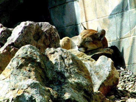 Penn's Cave : Wild life tour