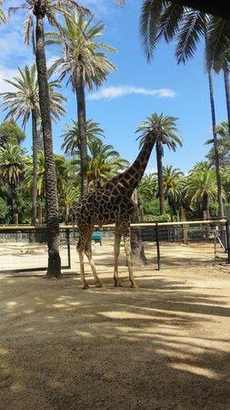 Zoobotánico Jerez: Giraffe