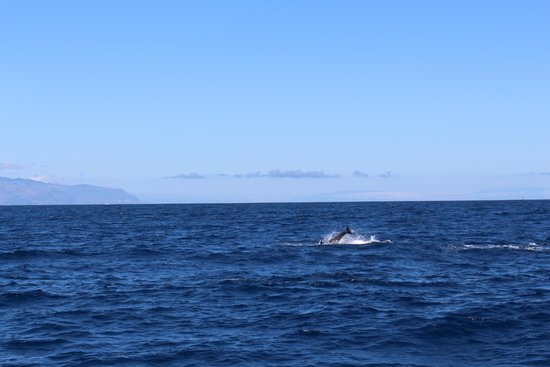 Eden Catamaran: Dolphin