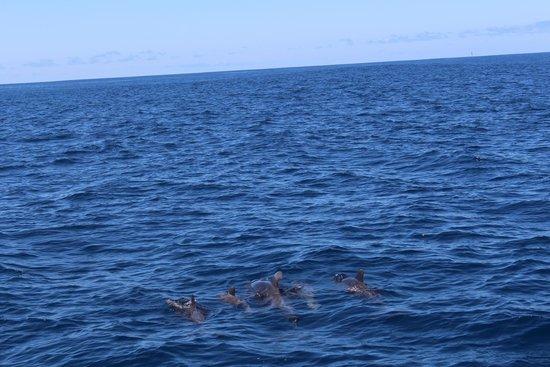 Eden Catamaran: Pilot Whale Family
