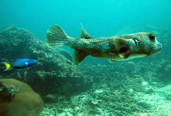 Indepth Dive College: Phi Phi and Shark Point day trip