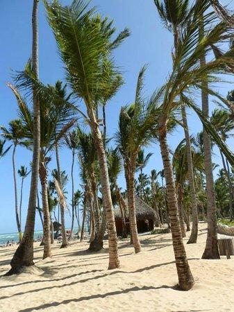 Sirenis Punta Cana Resort Casino & Aquagames: Cocoteros
