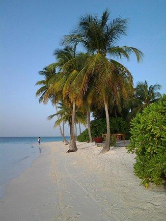 Mirihi Island Resort: strandabschnitt