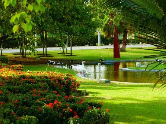 Sirenis Punta Cana Resort Casino & Aquagames: Jardines