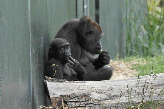 Dublin Zoo: mama met kind
