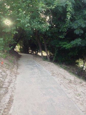 Allen Parkway Loop: Shade