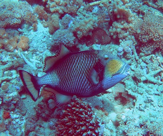 Atlantis Dive Resort Puerto Galera: Dive site: Monkey Beach