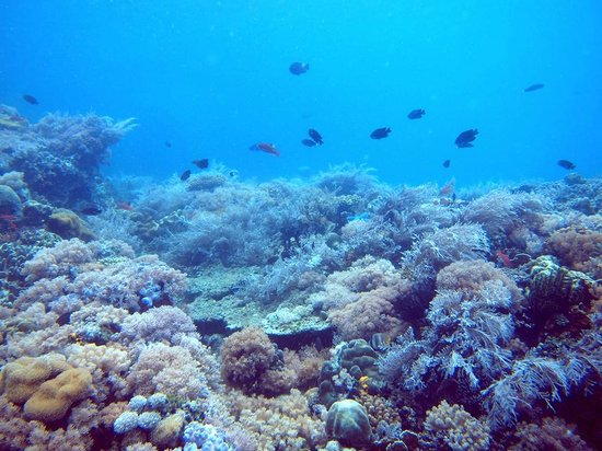 Atlantis Dive Resort Puerto Galera: Verde Island