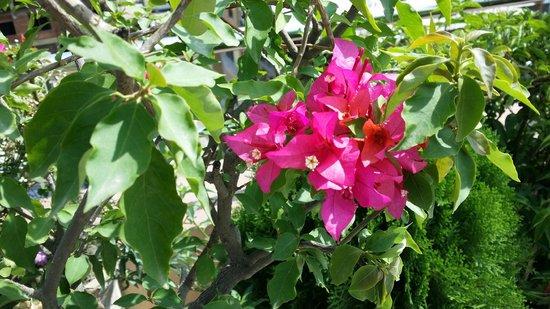 Hotel Friends Home: Terrace flowers