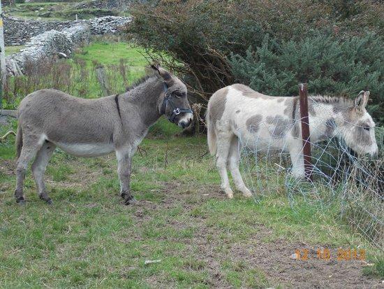 The Stonehouse Restaurant: Resident donkeys at the restaurant :)