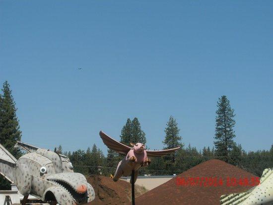 Burney Motel: flying pig