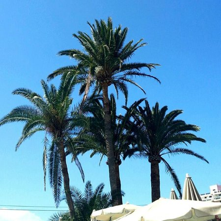 TRYP Tenerife : Lovely weather by the pool