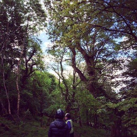 Killarney Riding Stables: Those trees!