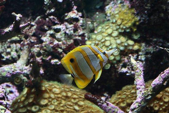 Acuario de Gijon : peces en acuario
