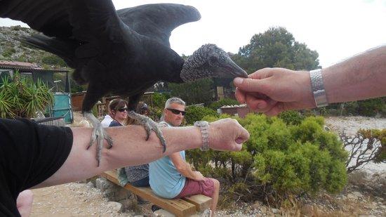 Teleferico Benalmadena : vogel ganz nah