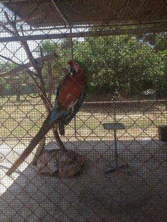 Safari Zoo: Papagei alleine in einem Gehege