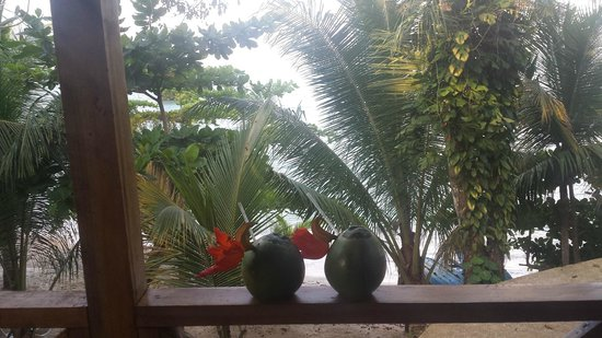 Popa Paradise Beach Resort: Coconut drinks in hand