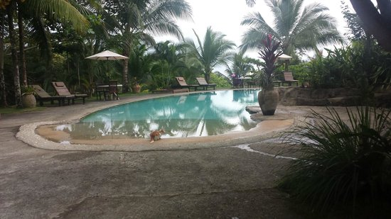 Popa Paradise Beach Resort: The wonderful pool (and guest kitty)