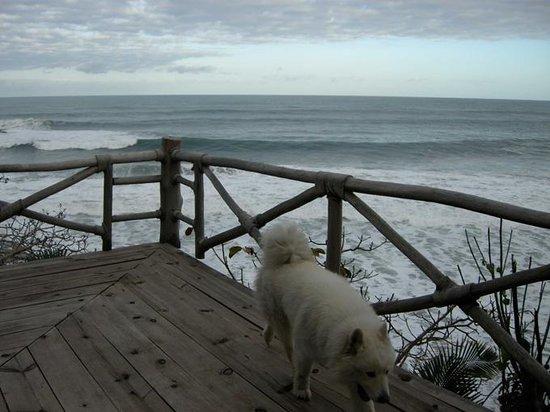 Punta Monterrey Beach: el perro y el mar