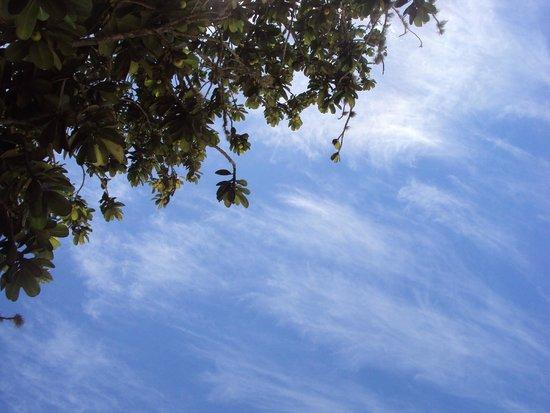 Lopes Mendes Beach : Debaixo das árvores em Lopes Mendes