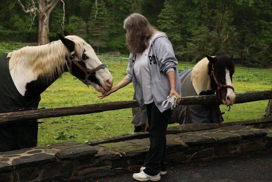 Hamanassett Bed & Breakfast : The horses know Emma!