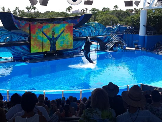 Rosen Inn at Pointe Orlando : Shamu Show