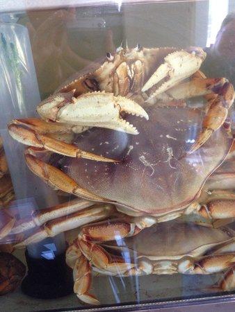 Sea Harvest Fish Market & Restaurant : Live Crab