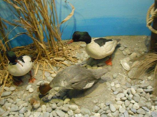 Museum of Natural History (Museum d'Histoire naturelle): au bord de l'eau
