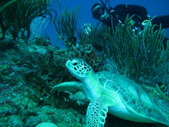 Dive Adventures : Dave Covette photo bomb