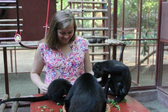 Foundation Jaguar Rescue Center : More monkeys
