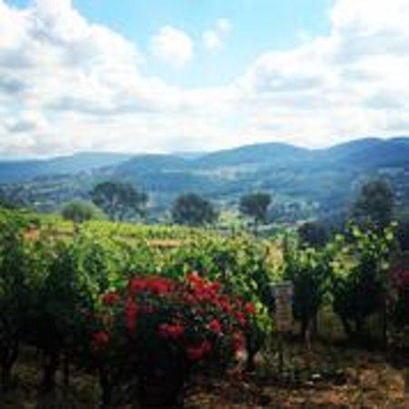 Provence Wine Tours : Provence Vineyard