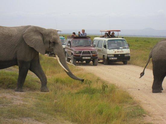 Amboseli National Park : Elephants on the move