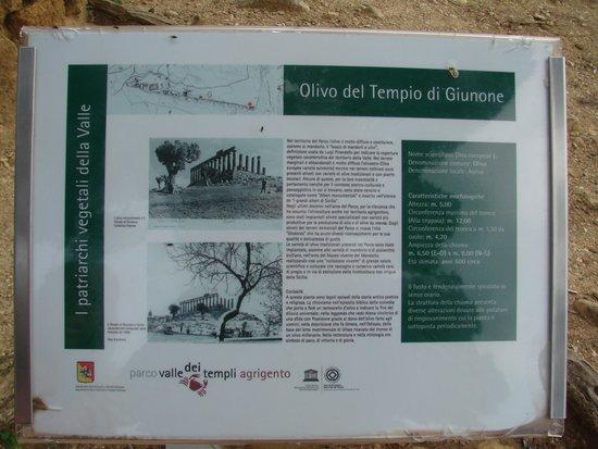 Sicily Tour Guides Agrigento: MAPA ILUSTRATIVO