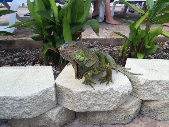 DoubleTree by Hilton Hotel Grand Key Resort - Key West: Loved the pool lizard