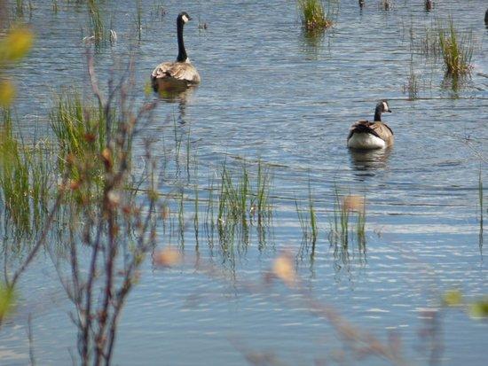 Vermilion Lakes: Beautiful!