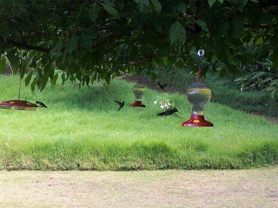 Reserva Curi-Cancha: Hummingbird Garden