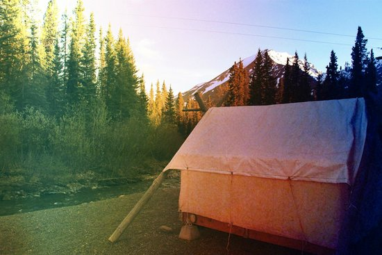 Denali Mountain Morning Hostel and Cabins : tent